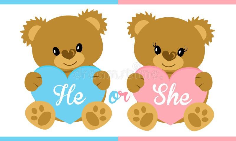 逗人喜爱的传染媒介字符例证 拿着蓝色和桃红色心脏的玩具熊 性别显露党 皇族释放例证