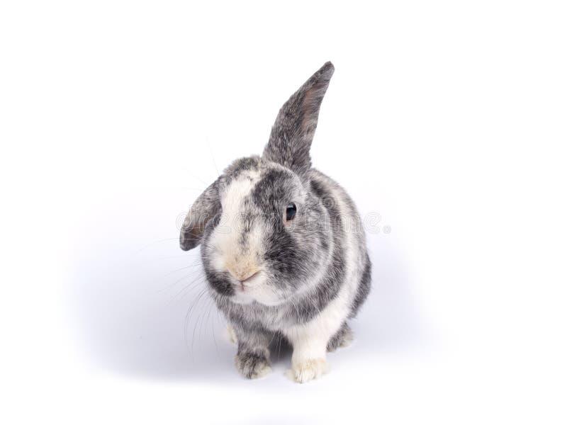 逗人喜爱的六岁的兔宝宝 库存照片