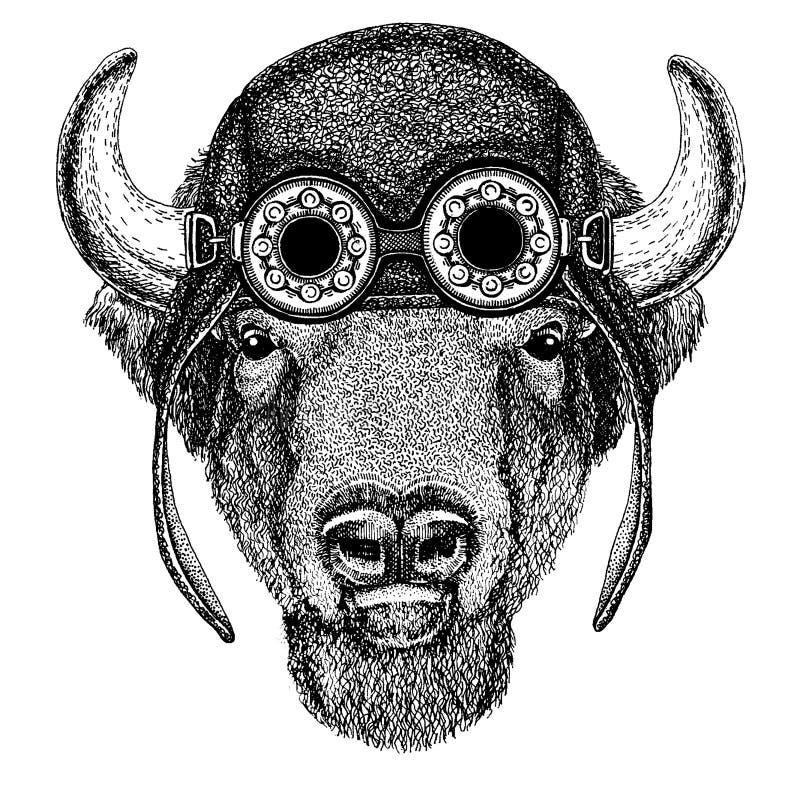 逗人喜爱的动物佩带的摩托车,飞行员盔甲水牛城,北美野牛,黄牛,纹身花刺的,象征,徽章商标公牛手拉的图象 库存例证