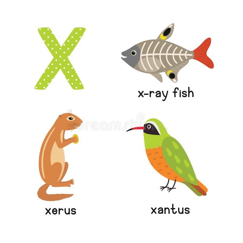 逗人喜爱的动物动物园字母表 在X-射线鱼的, xantus, xerus X上写字 向量例证