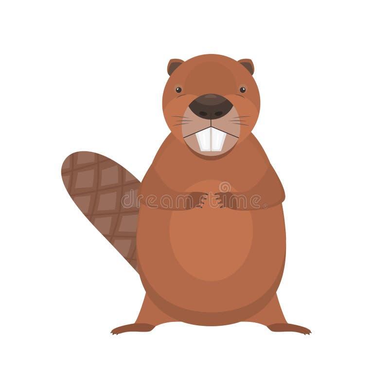 逗人喜爱的动画片平的传染媒介常设海狸字符 向量例证
