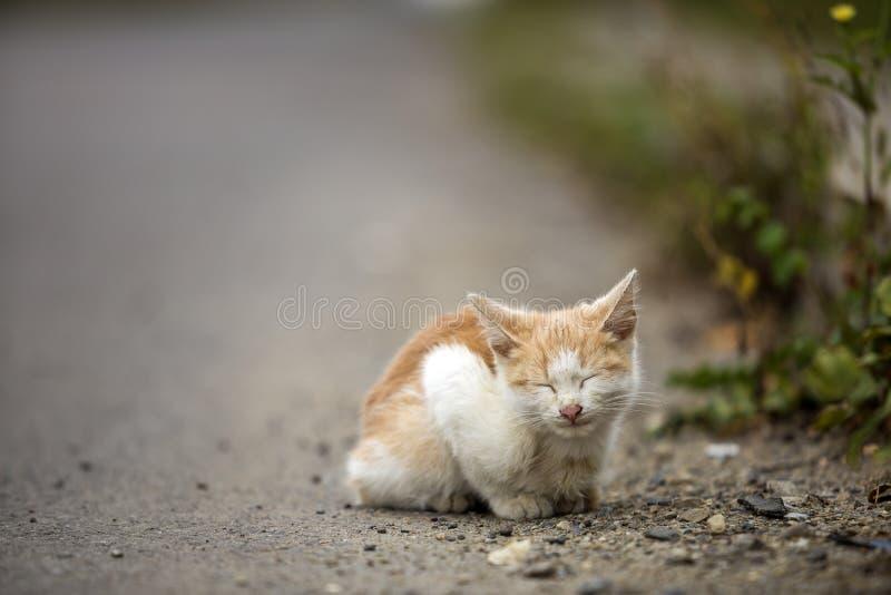 逗人喜爱的可爱的与闭合的眼睛的姜小白色幼小猫小猫画象作梦户外坐小小卵石摆在 库存图片