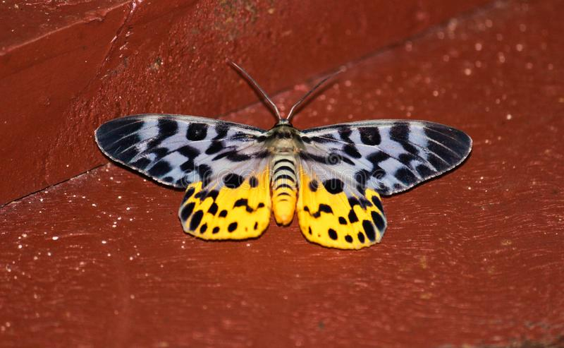 逗人喜爱的可爱的蝴蝶在晚上 库存图片
