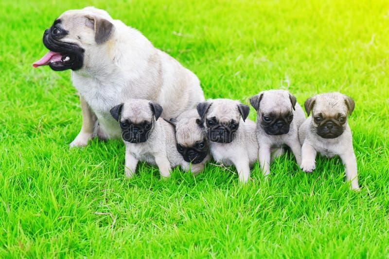 逗人喜爱的哈巴狗家庭在庭院里 免版税图库摄影