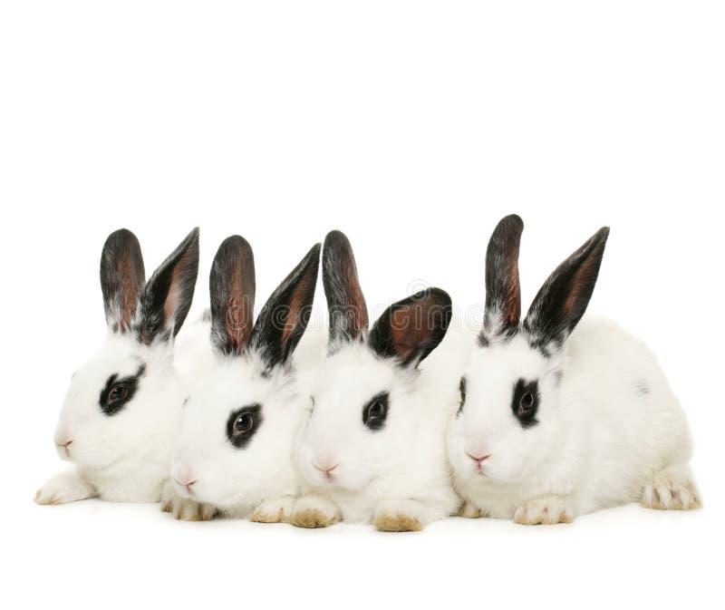 逗人喜爱的四只兔子 免版税库存照片