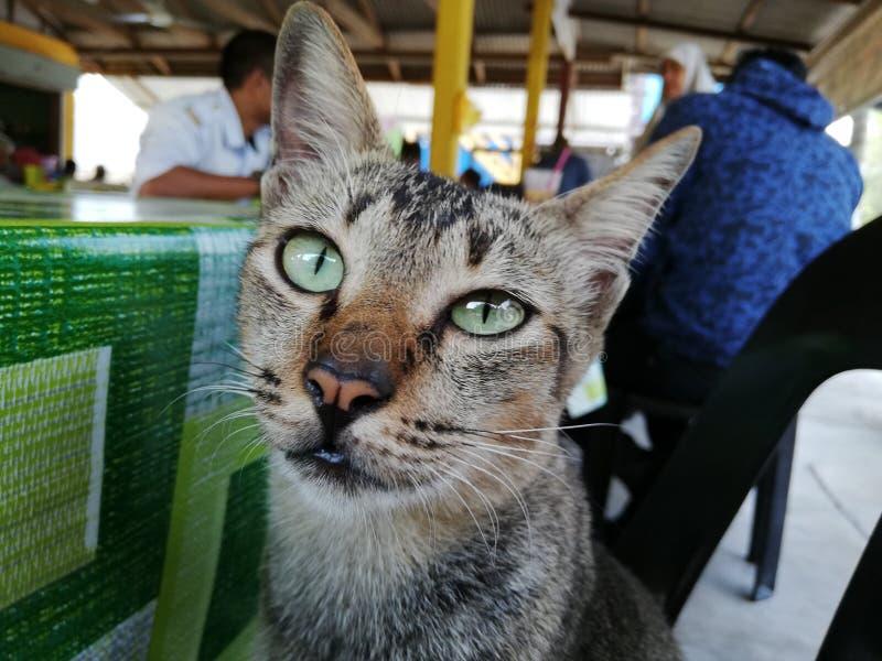 逗人喜爱的地方猫 库存照片