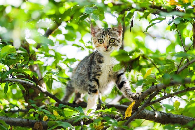 逗人喜爱的好奇准备好小猫猫上升的树跳跃 免版税库存照片