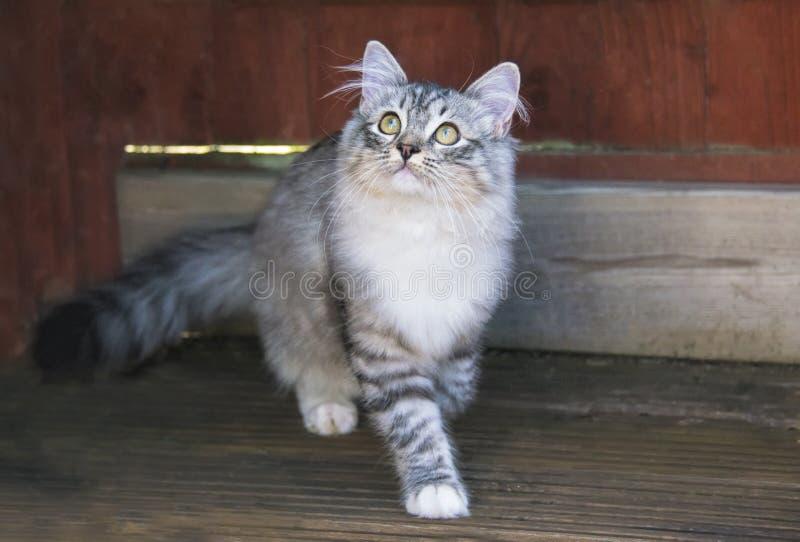 逗人喜爱的好奇小猫 免版税图库摄影