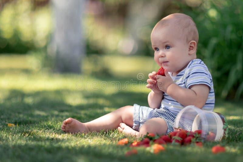 逗人喜爱的婴孩坐草和口味红色草莓 免版税库存照片