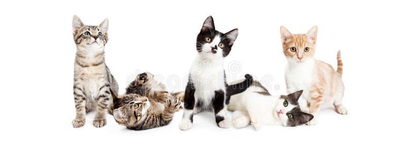 逗人喜爱的嬉戏的小猫横幅  免版税库存照片