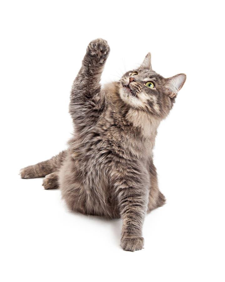 逗人嬉戏的喜爱的图片猫举的灰色.女开档情趣爪子图片
