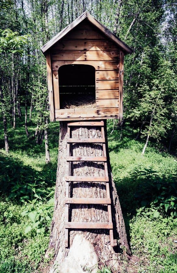 逗人喜爱的小木犬小屋在有台阶的一个庭院里 免版税库存图片