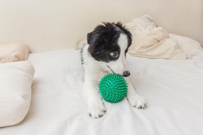 逗人喜爱的小狗博德牧羊犬滑稽的画象在枕头毯子和使用在床上放置与绿色玩具球 库存图片