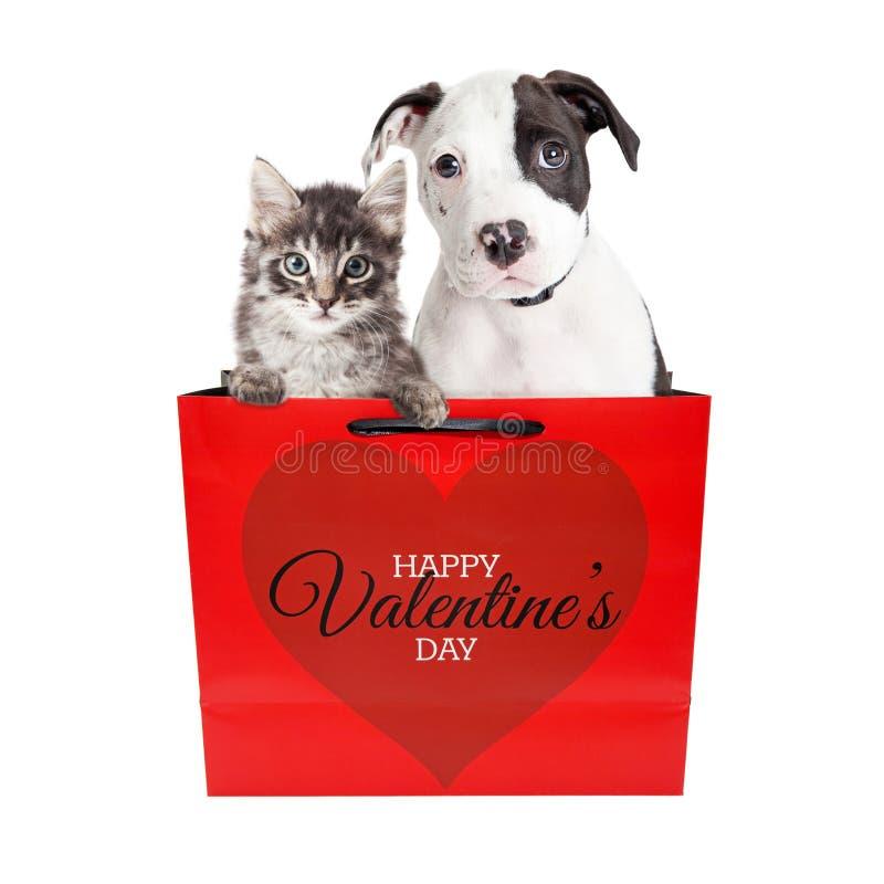 逗人喜爱的小狗和小猫在华伦泰` s天请求 免版税库存照片