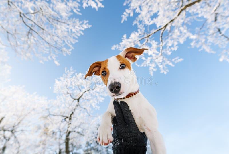 逗人喜爱的小狗在晴朗的冬日在手中 库存图片