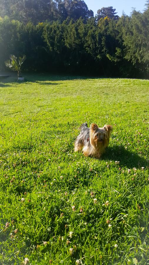 逗人喜爱的小狗绿色 图库摄影