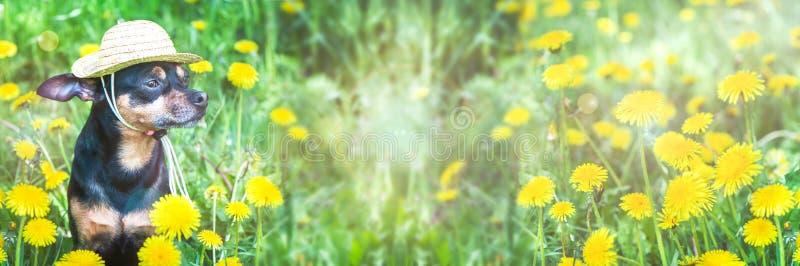 逗人喜爱的小狗,在春天黄色颜色的狗在一个开花的草甸,狗的画象 春天夏天题材,全景, 图库摄影