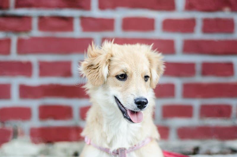 逗人喜爱的小狗画象在砖墙旁边的 库存照片