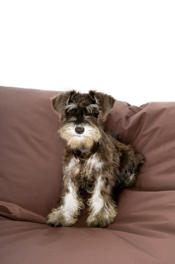 逗人喜爱的小狗 库存图片