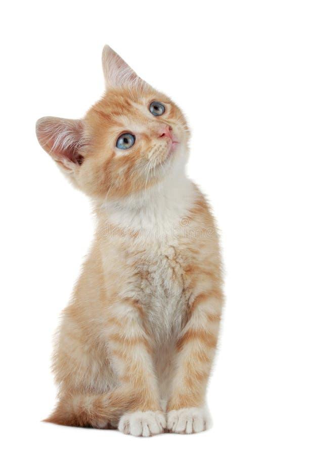 逗人喜爱的小猫一点 免版税库存图片