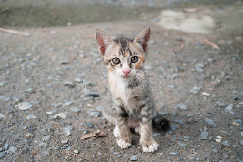 逗人喜爱的小猫两个月 库存照片
