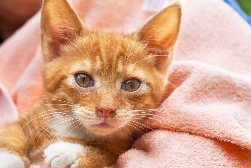 逗人喜爱的小猫猫 库存照片