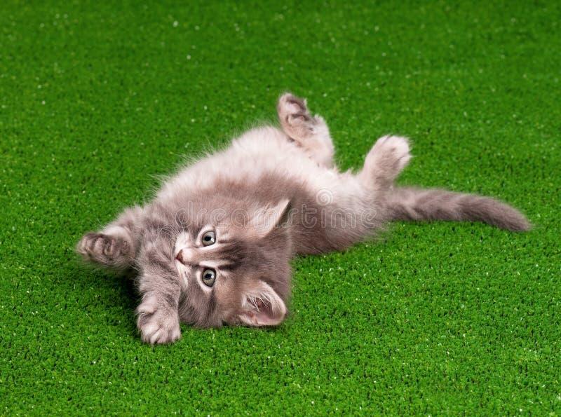 逗人喜爱的小猫 免版税图库摄影