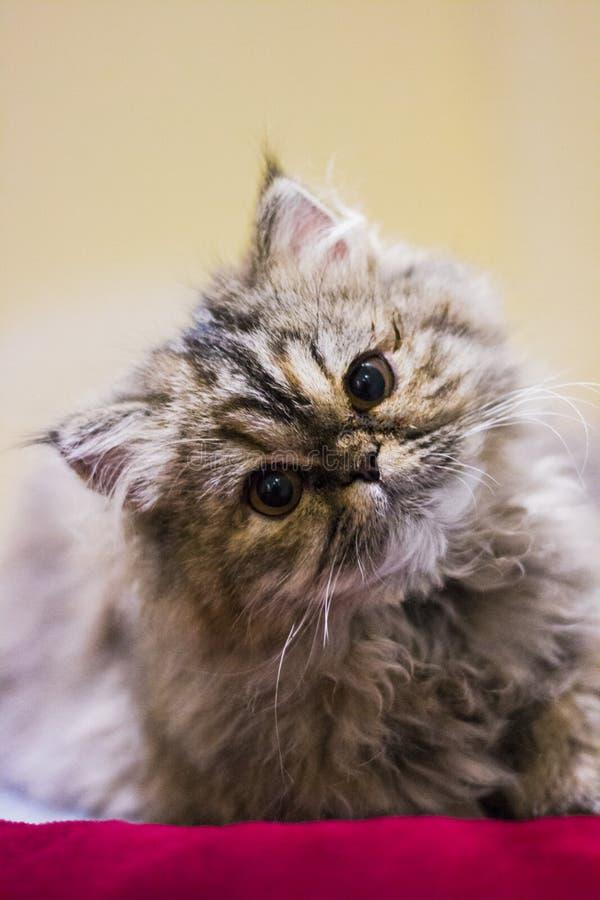 逗人喜爱的小的小猫 免版税库存图片