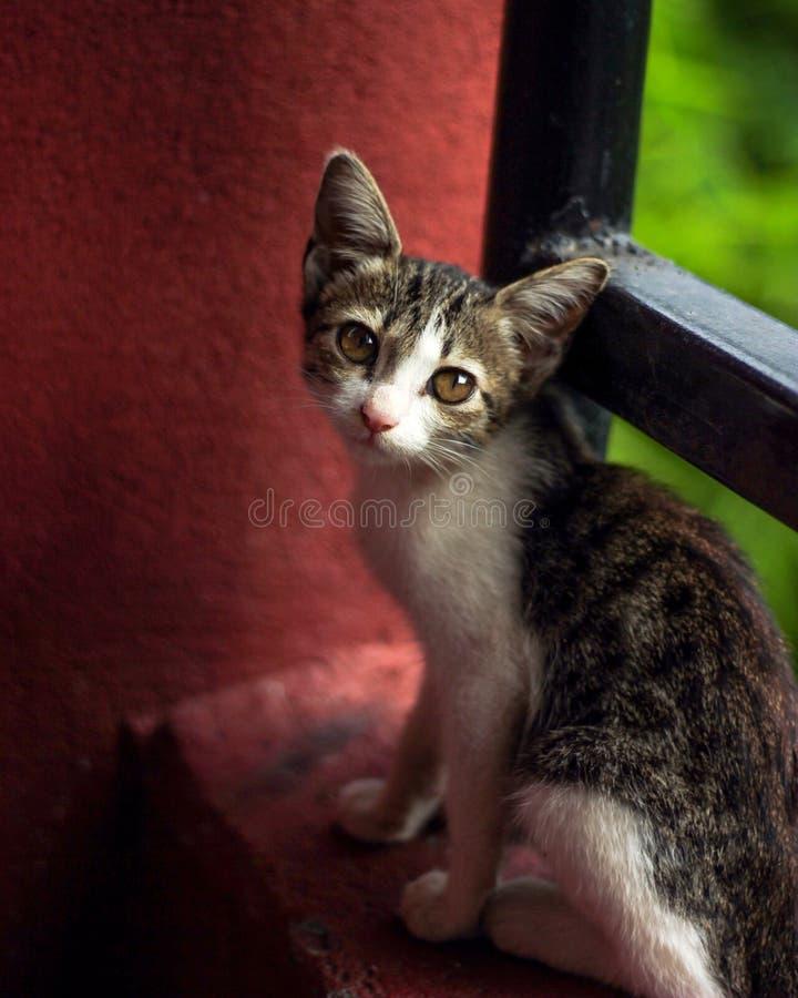 逗人喜爱的小的看照相机的猫坐阳台和清白的人 免版税库存照片