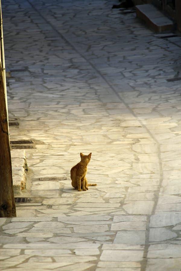 逗人喜爱的希腊小猫迷路者 图库摄影