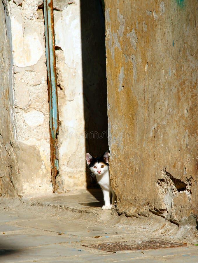 逗人喜爱的希腊小猫迷路者 免版税库存图片