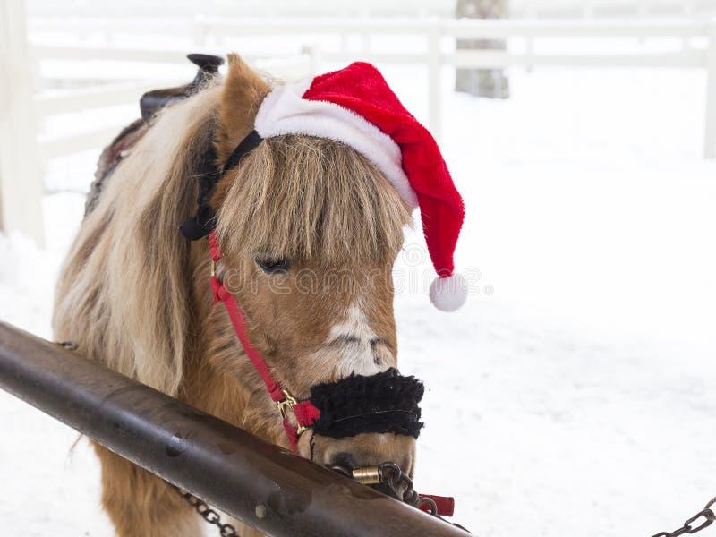 逗人喜爱的平底锅小马特写镜头与佩带圣诞老人ha的奶油色鬃毛的 库存图片