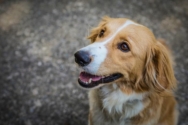 逗人喜爱的幼小杂种狗坐路面 免版税库存照片