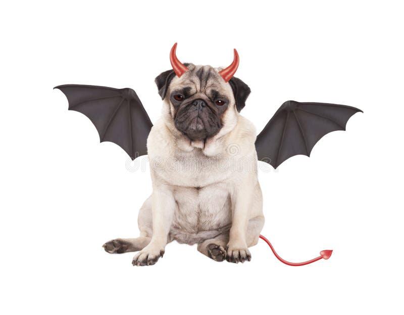 逗人喜爱的恶魔般哈巴狗小狗在万圣夜在白色背景装饰了,隔绝 库存图片
