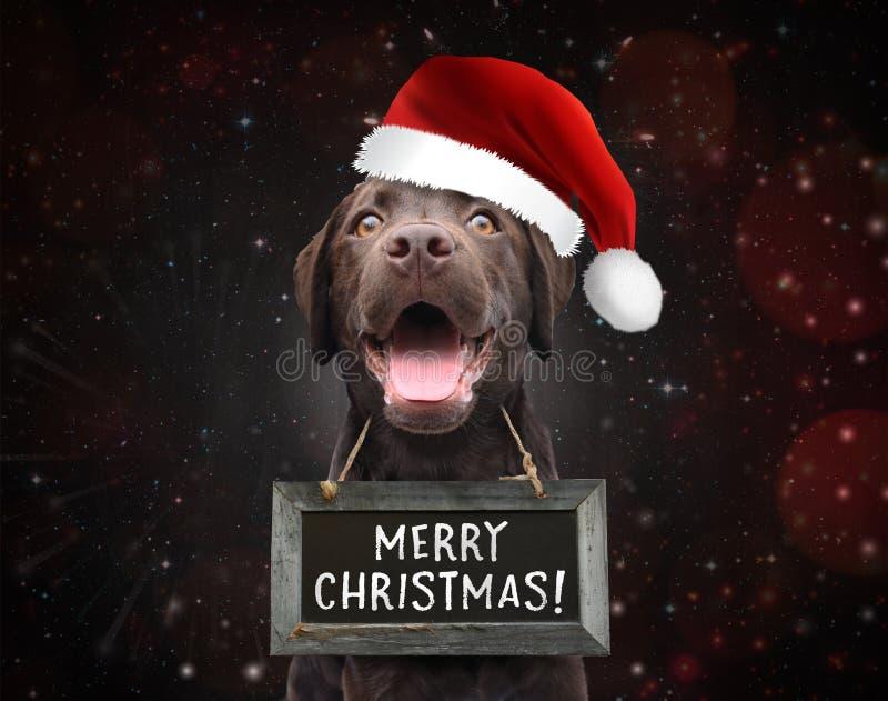 逗人喜爱的愉快的狗祝愿您佩带与圣诞节行情的圣诞快乐一个标志板 库存图片