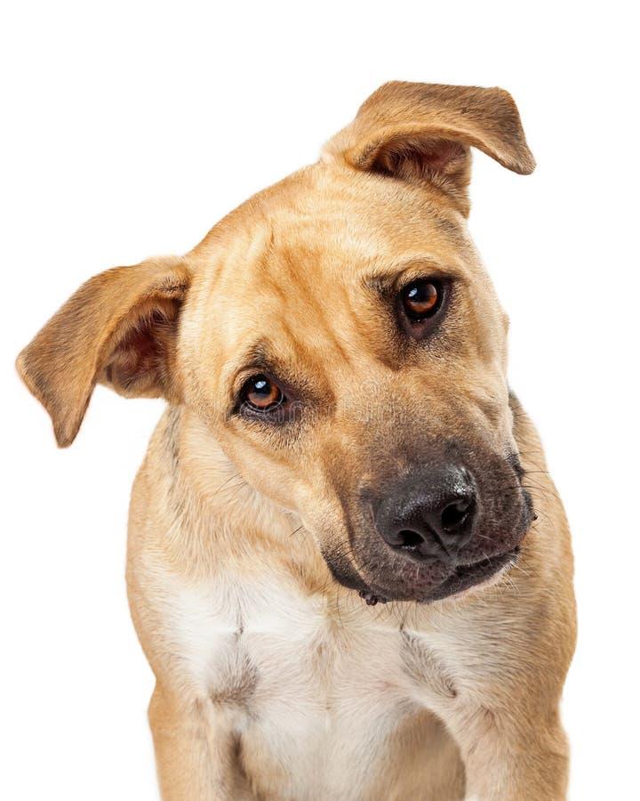 逗人喜爱的拳击手混合狗特写镜头 免版税图库摄影