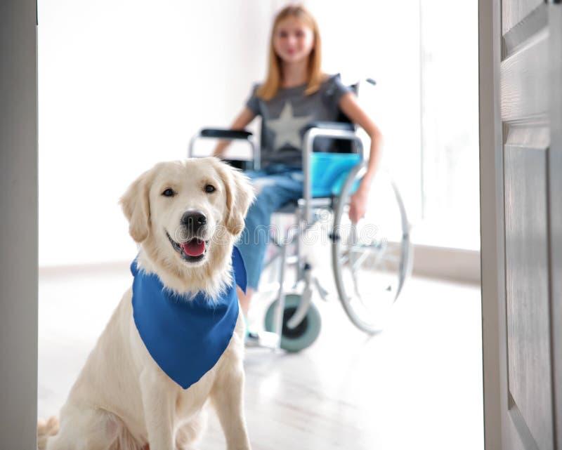 逗人喜爱的服务狗和被弄脏的女孩轮椅的 图库摄影