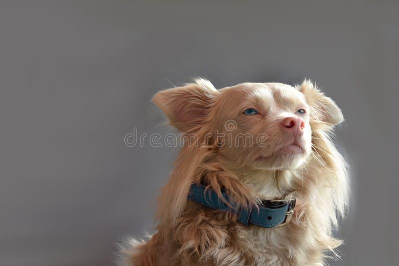 逗人喜爱的杂种狗 库存照片