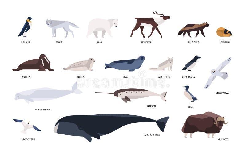 逗人喜爱的极性动物,鸟,居住北极和南极洲的海洋哺乳动物的汇集隔绝在白色背景 皇族释放例证