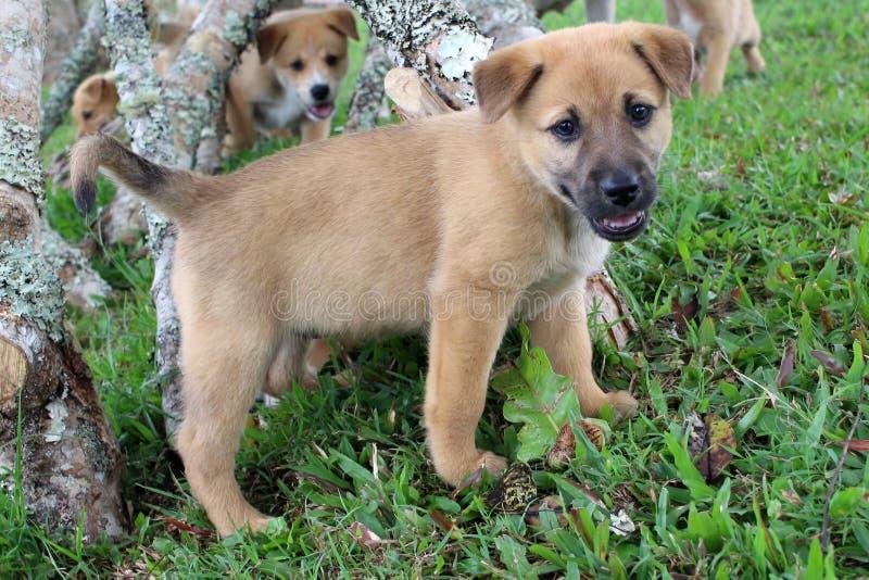 逗人喜爱的棕色混杂的品种小狗 免版税库存图片