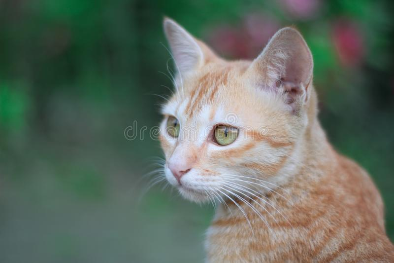 逗人喜爱的棕色猫 免版税库存照片