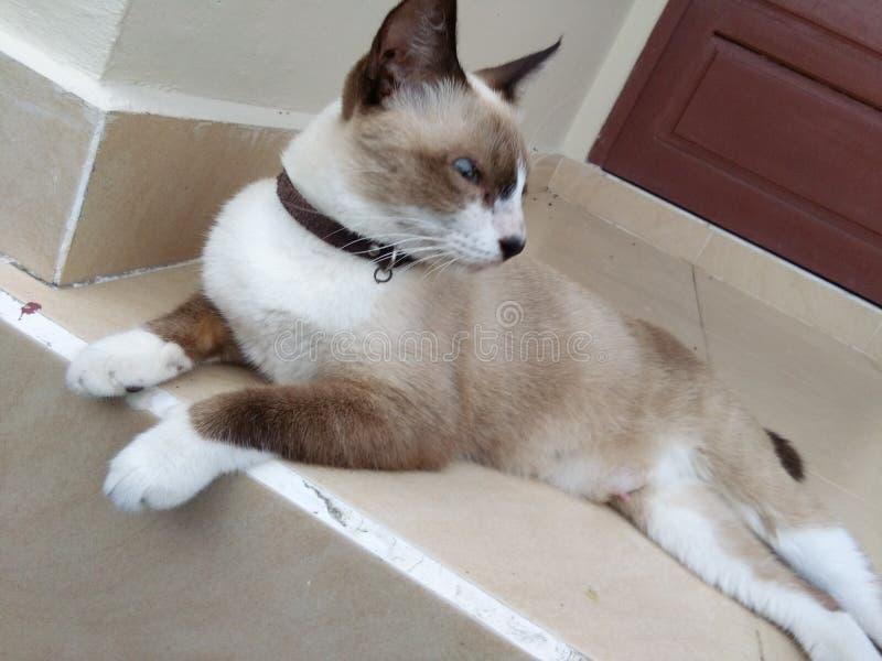 逗人喜爱的棕色猫 库存照片