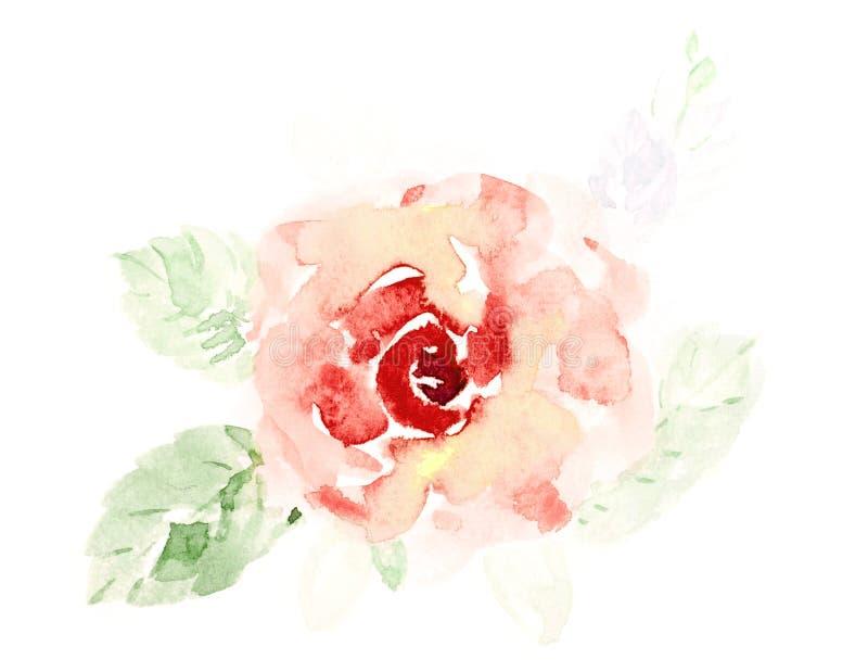 逗人喜爱的橙色玫瑰色花水彩手画在白色背景 向量例证