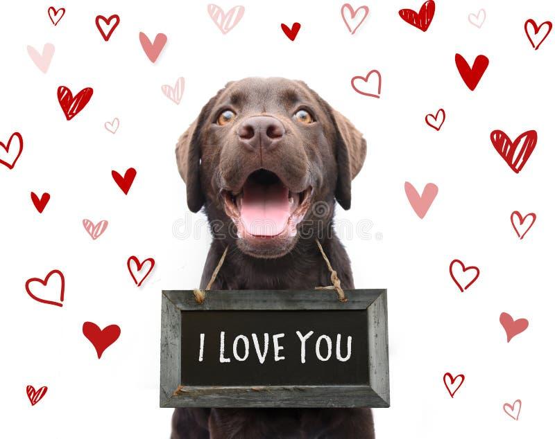 逗人喜爱的浪漫狗说我爱你,在标志板的文本与红色h 库存照片
