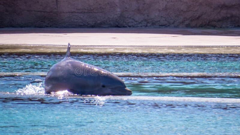 逗人喜爱的海豚在明亮的阳光下 库存图片