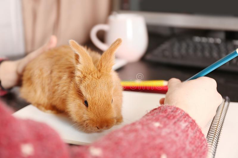 逗人喜爱的滑稽的兔子坐笔记本和妇女 库存图片