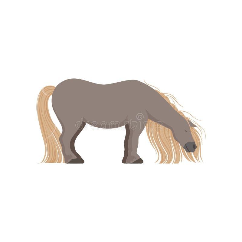 逗人喜爱的灰色小马,良种马传染媒介例证 皇族释放例证