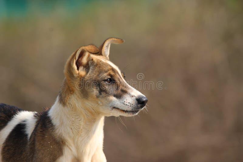 逗人喜爱的狗一点 免版税库存照片