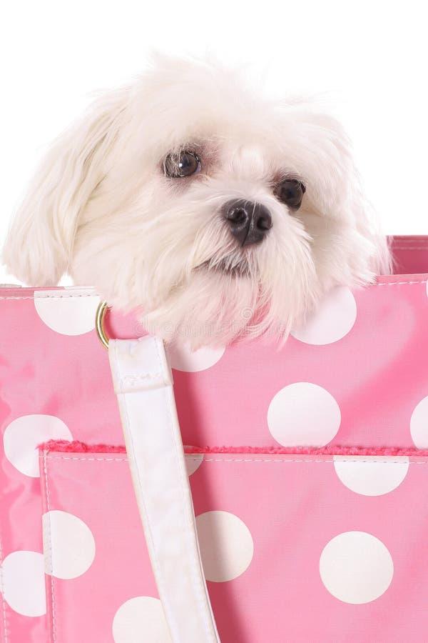 逗人喜爱的狗准备好的一点旅行 图库摄影