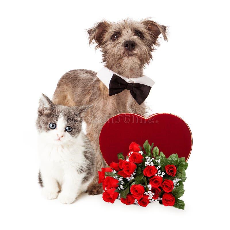 逗人喜爱的狗和小猫与华伦泰心脏和花 库存图片